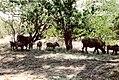 Warthogs (223954445).jpg