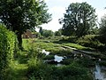 Watercress beds, Ewelme - geograph.org.uk - 1439428.jpg