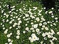 Wayside flowers - geograph.org.uk - 178227.jpg