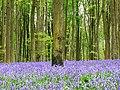 West Woods, near Marlborough - geograph.org.uk - 789421.jpg