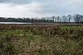 Westerbroek - natuurgebied (3).jpg