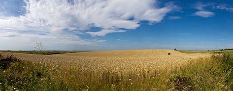 Wheat fields in Ukraine-5966-98.jpg