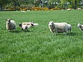 Where sheep may safely graze - geograph.org.uk - 808901.jpg