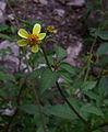 Whf yellow 34.jpg