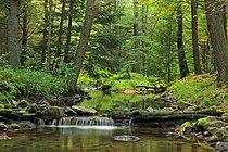 White Deer Creek.jpg