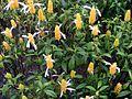 White and yellow plants in Dalat.jpg