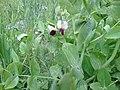 Wild flower12.jpg