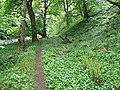 Wild garlic by the River Conon - geograph.org.uk - 830185.jpg