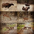 Wildlife of Tadoba andhari tiger reserve.jpg