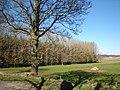 Woodland near Baikie Sawmill - geograph.org.uk - 387080.jpg