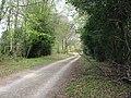 Woodland ride, Wylde Warren - geograph.org.uk - 160235.jpg