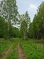 Yakshur-Bodyinskiy r-n, Udmurtskaja Respublika, Russia - panoramio (2).jpg