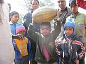 Yellow Pumpkin from Banapiri village 1 - Jharkhand state of India.JPG