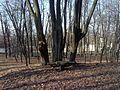 Zespół Pałacowo - Parkowy w Młoszowej - panoramio (2).jpg