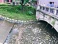 Zhongshan-green-bridge-祝萍-04.jpg