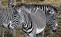Zoo de Vincennes, Paris, France April 2014 (2).jpg