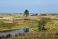 Zwin Natuurpark R04.jpg