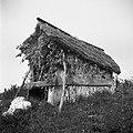 """""""Baraka"""", obita s koruznco, pokrita s slamnato streho za vahto proti divjim prašičem, Visejec 1957 (2).jpg"""