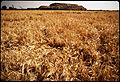 """MT. VESUVIUS"" DUMP, SOIL-COVERED TRASH - NARA - 542536.jpg"