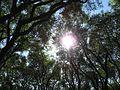 Árboles - panoramio (1).jpg