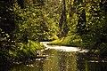 Ébredő természet - panoramio.jpg