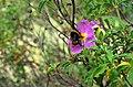 Αισθητικό δάσος Υμηττού - Mount Hymettus Aesthetic Forest 4.jpg