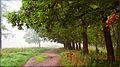 Аллея в Приоратском парке.jpg