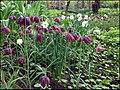 Ботанический сад (Петровский огород) - panoramio (6).jpg