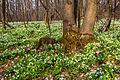 Весна в лісі.jpg