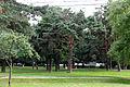 Вид в парке.JPG