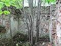 Відзы. Капліца на старых могілках пад Відзамі (03).jpg