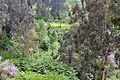 Грузия - panoramio (32).jpg