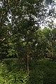 Дендрарій Київського зоопарку (масив дерев) IMG 3384.jpg