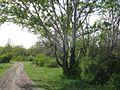 Дендрологічний парк 212.jpg