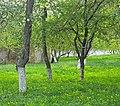 Дерева дерену Святослава Ярославича, Києво-Печерська лавра.jpg