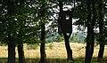 Домик на дереве - panoramio (1).jpg