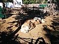 Зоологічний парк - тварини на галявині.jpg