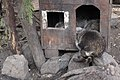 Київський зоопарк Єноти 11.JPG