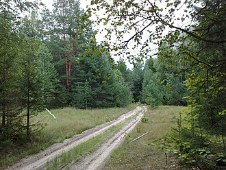 Khvastovichsky District - Forest in Khvastovichsky District