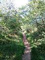 """Парк шума """"Гази Баба"""" 26.jpg"""