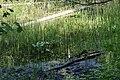 Пуща-Водиця DSC 0840.jpg