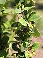 Растения в Седово 217.JPG