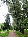Сестрорецк. Парк Дубки, заложенный по указу Петра I. - panoramio.jpg