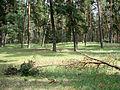 Сосновый бор (SSE) - panoramio.jpg