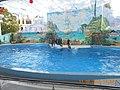 Сочинский дельфинарий парка «Ривьера». 79.jpg
