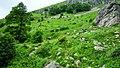 """Стара Планина-околностите на хижа""""Рай"""" - panoramio (4).jpg"""