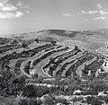 הרי יהודה - דירוג-JNF001048.jpeg