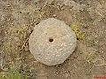 خراس سنگی مکشوفه از تجری علیا واقع در روستای زالی از ولایت ارغیان.JPG