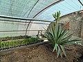 گلخانه کاکتوس دنیای خار در قم. کلکسیون انواع کاکتوس 32.jpg