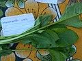 पालकाची पाने Spinach Leaves.jpg
